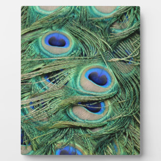 Most Beautiful Peacock Feathers Bold Blue Eyes Photo Plaques