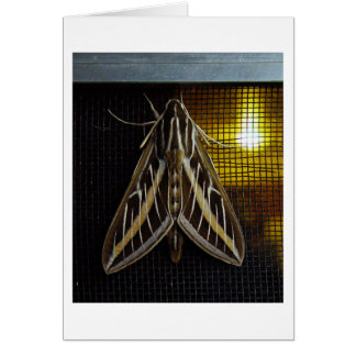 Moth and Lightbulb Greeting Card