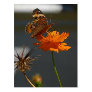 Moth and Orange Yellow Coreopsis Postcard