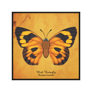 Moth Butterfly Canvas Print