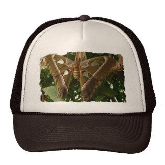 Moth Trucker Hats