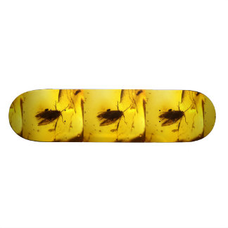 Moth inside amber skate boards