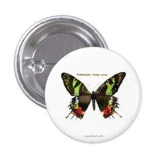 Moth: Madagascan Sunset Moth 3 Cm Round Badge