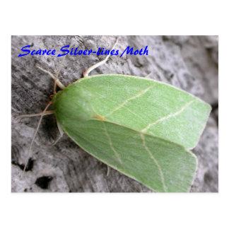 Moth Magic: Scarce Silver-lines Moth postcard