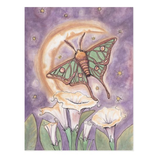Moth & Moonflowers Postcard