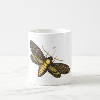 Moth moth mugs