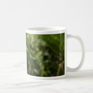 Moth Coffee Mugs