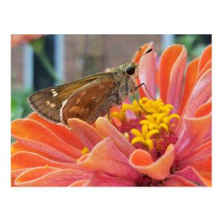 Moth On Orange Flower Postcard
