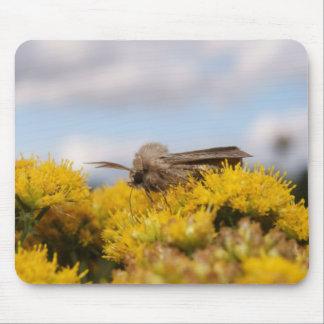 Moth On Yellow Flowers, Mousepad