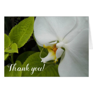 Moth Orchid Floral Thank You Card