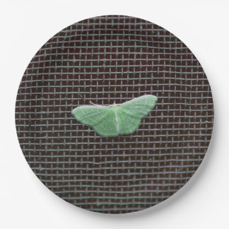 Moth, Paper Plates. Paper Plate