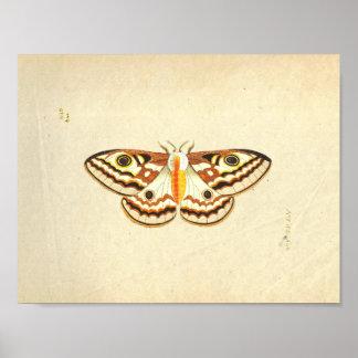 Moth scientific illustration print