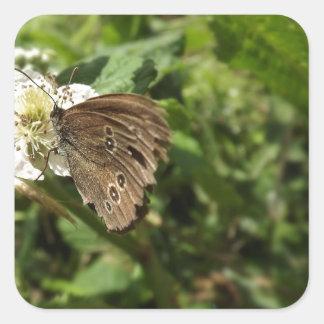 Moth Square Sticker