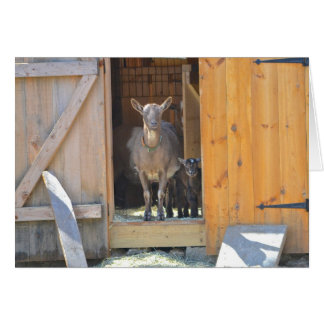 Mother and Baby Goat Notecard