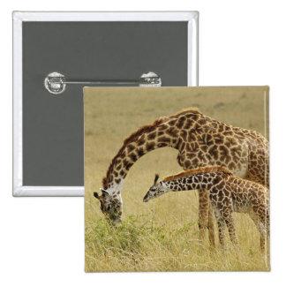 Mother and baby Masai Giraffe, Giraffa 15 Cm Square Badge