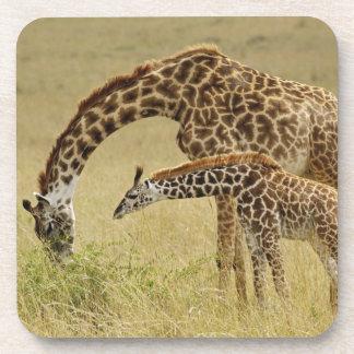 Mother and baby Masai Giraffe, Giraffa Beverage Coasters