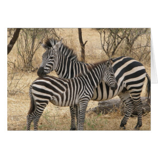 Mother and Baby Zebra  Greeting Card