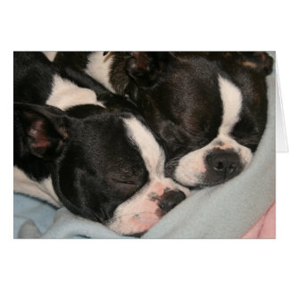 Mother and child puppy Note Card Boston Terrier