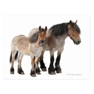Mother and foal smiling, Belgian horse, Belgian Postcard