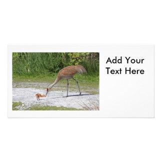 Mother Bird and Baby Bird Sandhill Cranes Customised Photo Card