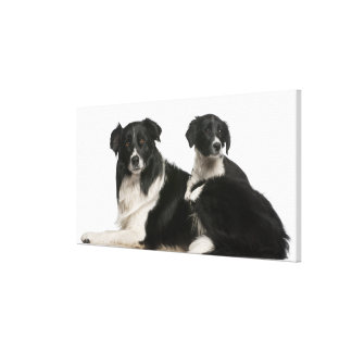 Mother border collie and puppy canvas print