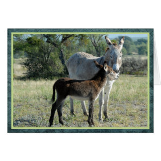 Mother burro and baby card