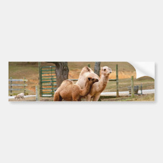Mother Camel and Baby Animal Photo Desert Animal Bumper Sticker