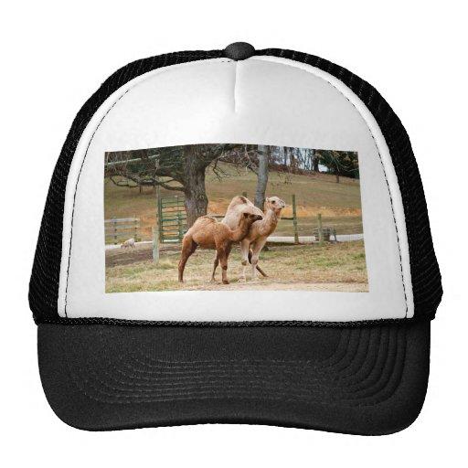 Mother Camel and Baby Animal Photo Desert Animal Trucker Hat