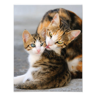Mother Cat Loves Cute Kitten  - Paperprint Photo Print