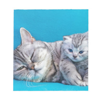 Mother cat lying with kitten on blue garments notepad