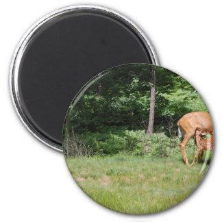 Mother Deer Feeds Her Babies Magnet