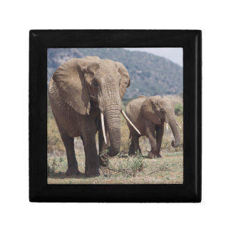 Mother elephant walking with elephant calf gift box