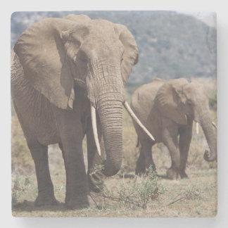 Mother elephant walking with elephant calf stone coaster