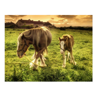 Mother & Foal Horse Postcard
