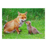 Mother fox and cub posters