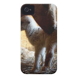 Mother Goat with brand new babies Case-Mate iPhone 4 Case