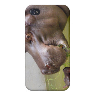 Mother Hippo with Little Baby Hippo iPhone 4/4S Cases