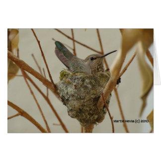 Mother Hummingbird Card