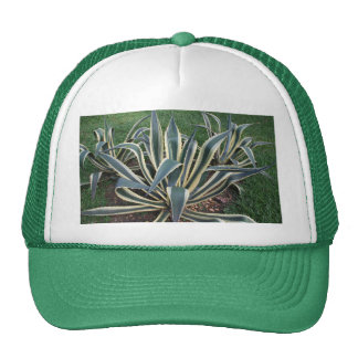 Mother in Law tongue Tropical plant hat