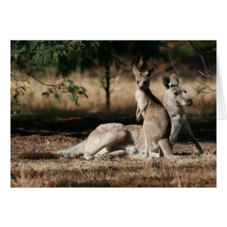 Mother Kangaroo and Joey Relaxing Greeting Cards