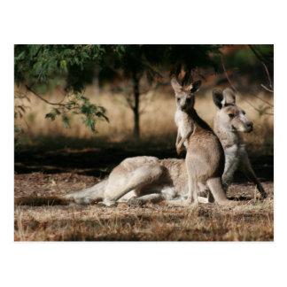 Mother Kangaroo and Joey Relaxing Postcard