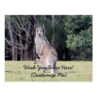 Mother Kangaroo with Baby Joey in Her Pouch Postcard