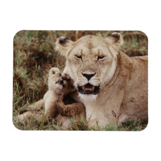Mother lion sitting with her cub rectangular photo magnet
