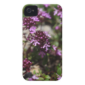 Mother of thyme flowers (Thymus praecox) iPhone 4 Case-Mate Cases