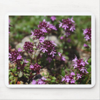 Mother of thyme flowers (Thymus praecox) Mouse Pad