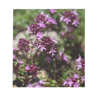 Mother of thyme flowers (Thymus praecox) Notepads