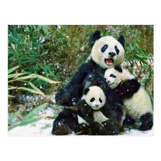 Mother Panda Postcard