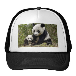 Mother Panda With Her Cub Trucker Hats