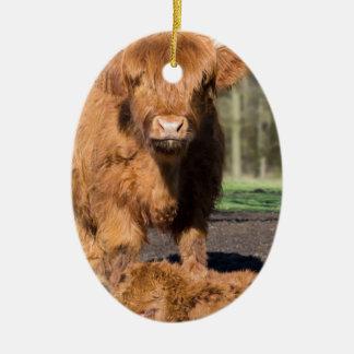 Mother scottish highlander cow near newborn calf ceramic ornament
