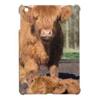 Mother scottish highlander cow near newborn calf iPad mini cover
